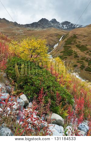 Autumn landscape in the mountains. Beautiful trees and bushes on the hillside. Caucasus, Georgia, Zemo Svaneti