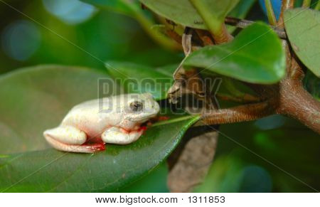Frog In Tree