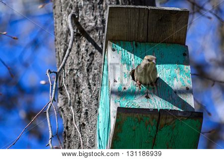 Sparrow Sitting On A Tree In A Manger