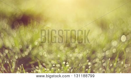 Abstract Blurred grass green background with bokeh