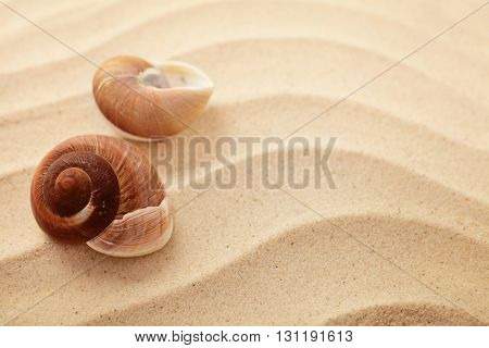 summer background. seashells on sand