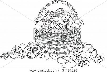 vector illustration of basket full of fruits in line art mode