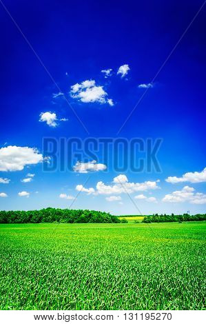 Unforgettable view of a green wheat field.