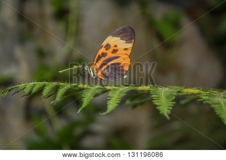 Butterfly with multiple colors resting on green fern