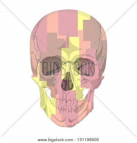 human skull bones skeleton dead anatomy illustration camouflage