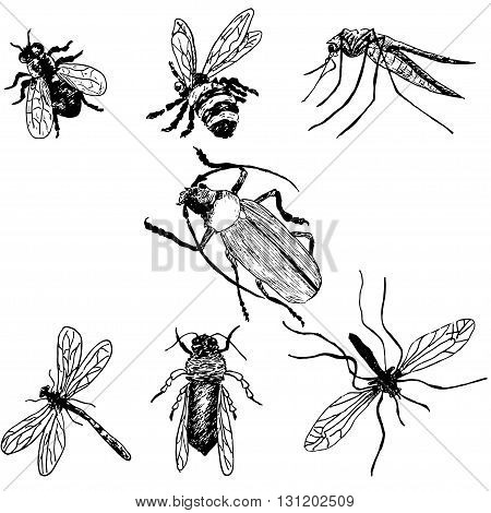 Hand-drawn insects. Bee fly mosquito hook dragonfly wasp