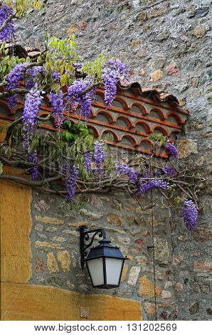 Cascading purple wisteria blossoms and lantern щn old wall