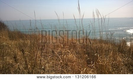 spikelets of grass on the edge overlooking the sea