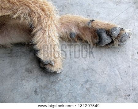 dog foot on floorbrown dog foot very dirtydog foot feelling happy