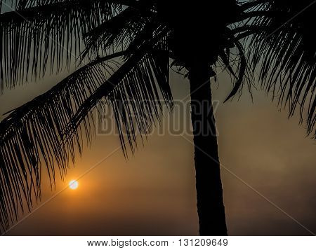 Summer silhouette palm tree in golden hour.