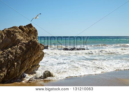 Seagull flying over the cliff in Malibu California