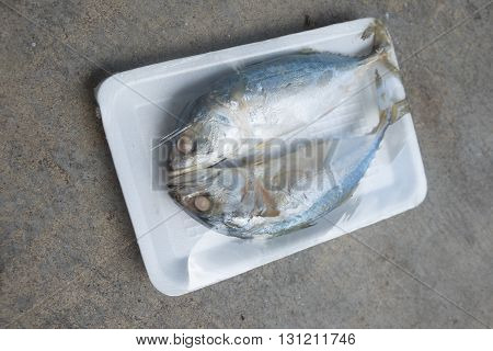 Two of steamed mackerel fish in foam tray (local fish in asian Thailand accent is pla too)