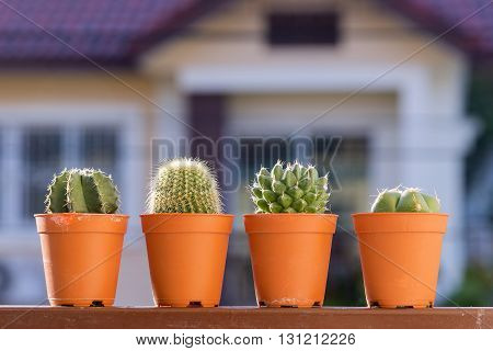 the cactus plants on the terrace with sun light
