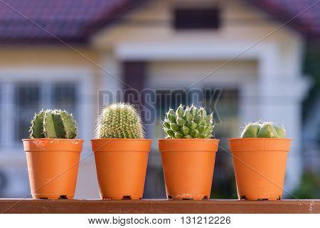 the cactus plants on the terrace with sun light