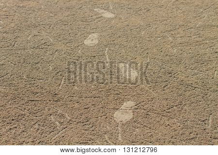 Footprint on sand beach in summer abstract nature background
