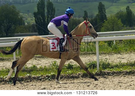 Jockey on akhal-teke horse in Pyatigorsk,Northern Caucasus