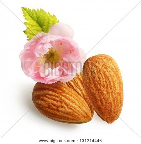 Almonds nuts with flower isolated on white background.