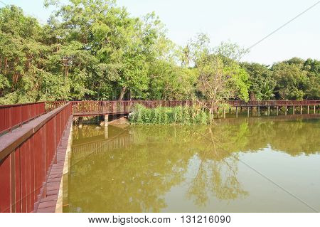 Wooden Bridge In Tropical Forest