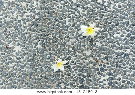 white and yellow frangipani on pebble floor