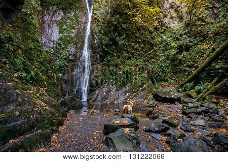 Two dogs take a drink at Niagara Falls in Goldstream Victoria British Columbia
