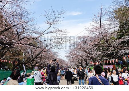 TOKYO, JAPAN - MARCH 29, 2016: Ueno Park during the cherry blossom season on 29 March 2016. Ueno Park is one of Tokyo's most popular and lively cherry blossom spots with more than 1000 cherry trees.