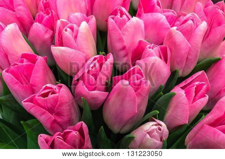 Holiday Bouquet spring flowers pink tulips colorful tulips.