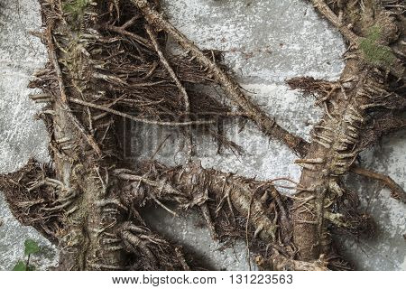 background nature roots brown art beautiful texture