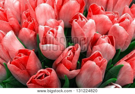 Holiday Bouquet spring flowers pink tulips. flowers background.