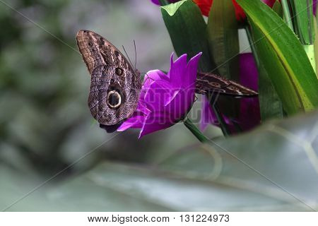 Butterfly on a purple vivid flower in grass