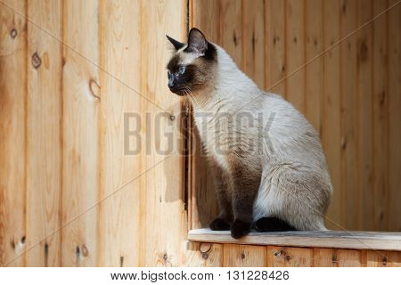 Siamese cat sitting on the railing of a wooden house.