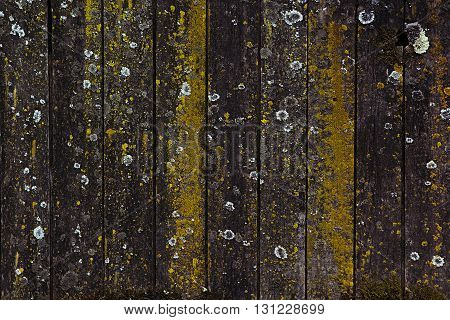 Vintage wooden background. Old boards covered with lichen. Texture. Wood background.
