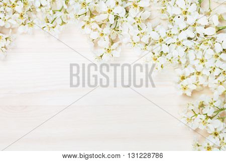 Branches of bird cherry on a light wooden board. Border. Copy space. Floral background. Wooden background. Texture.
