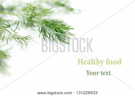 Sprig of green dill on a white background. Frame with copy space for text. Isolated studio close-up