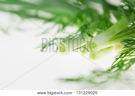 Fresh green onions and dill on a white background. Frame with the copy space. Studio close-up