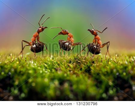 Three ant. Conflict, ants fight. Conceptually - dialogue, conversation, meeting, showdown, difficult negotiations. Beautiful rainbow background. Ants large, raised abdomens