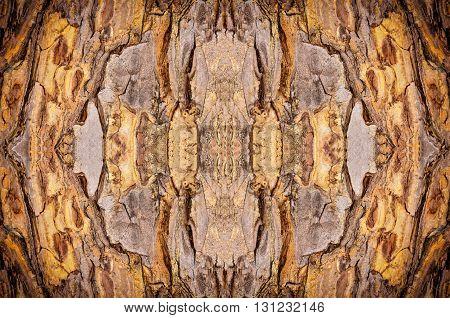 Close up brown beautiful Bark Tree Texture