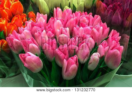 Tulip. Color tulips bouquet of tulips tulips isolated tulips in bouquet.