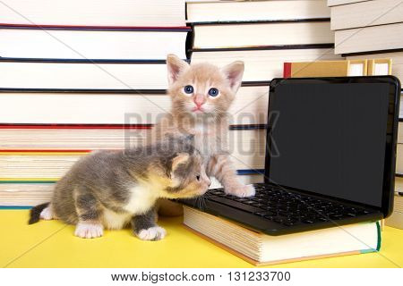 male orange tabby kitten looking at miniature laptop computer. Female calico sitting beside him looking at screen. Piles of books next to and under computer. paw on keyboard. Back to school.
