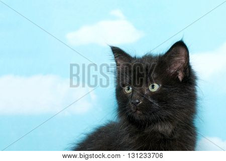 Portrait Of A Black Dusty Dirty Kitten