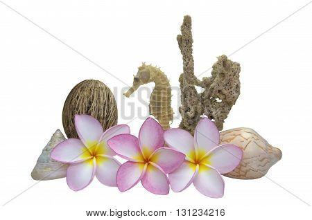 Plumerias set with Dried Sea sponge Sea shell and Sea Horse Isolate on White background