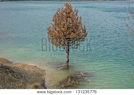 Drowned pine wood rotting in the lake with blue and green water
