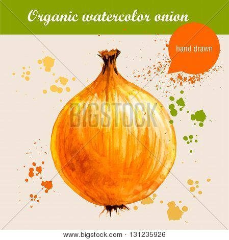 Vector watercolor hand drawn onion with watercolor drops. Organic food illustration.