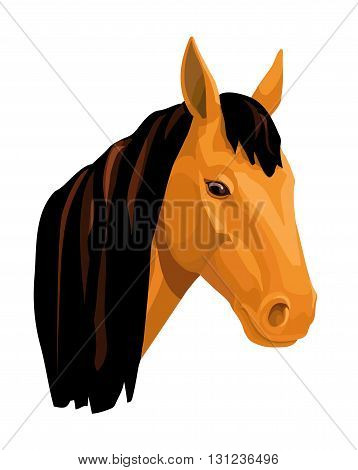isolated light bay horse on a white background
