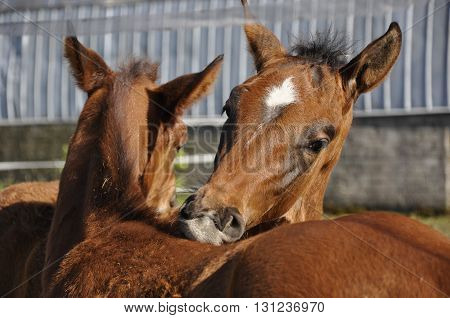 On a sunny spring day, foals frolic fun