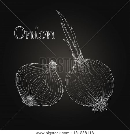 Onion hand drawn set. Vintage retro background with hand drawn sketch onions on blackboard. Herbs and spices vector illustration