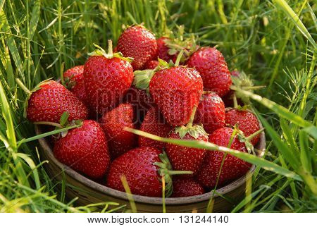 Ripe and tasty strawberries in a clay bowl on the grass