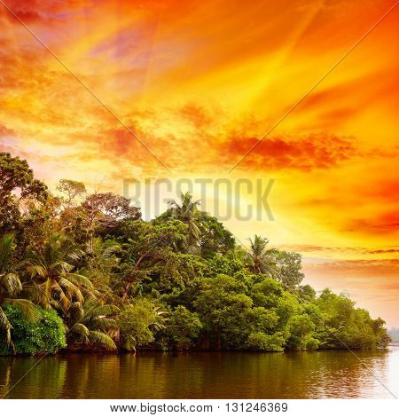 Bright sunrise over lake in jungle