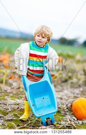 Cute blond kid boy with big pumpkins on autumn day, choosing squash for halloween or thanksgiving on pumpkin patch. Child having fun with farming.