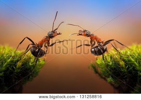 Two ant over the precipice attracted to each other