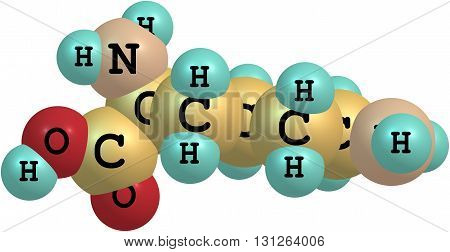 Lysine - Lys - is an amino acid. It is an essential amino acid for humans. 3d illustration